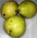 frutas-e-verduras-0411